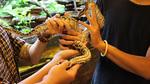 Trăn 2 đầu, gà 4 chân, chim mặt khỉ,… 'độc nhất vô nhị' tại Việt Nam