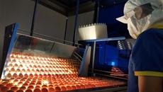 Trứng, thịt gà công nghiệp 'rẻ chưa từng thấy'
