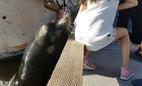Hoảng hốt thấy sư tử biển lôi thốc bé gái xuống nước