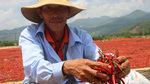 Ớt 50 ngàn/kg mất giá còn 2 ngàn: Lại do Trung Quốc