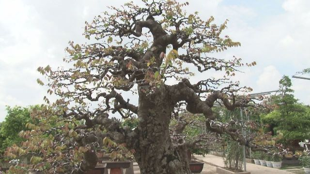 Vườn cảnh 70 tỷ của lão nông Đồng Tháp