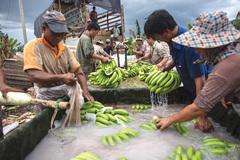 Lào chọn tiền hay chọn chuối Trung Quốc ngâm hóa chất?