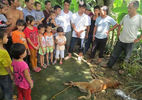 Sau 7 năm, Sài Gòn có người chết vì chó dại cắn