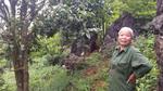 Chỉ 1 cây rau sắng rừng thu 3 triệu đồng