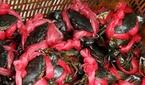 Phạt 3 du khách Trung Quốc đến Việt Nam thu mua cua