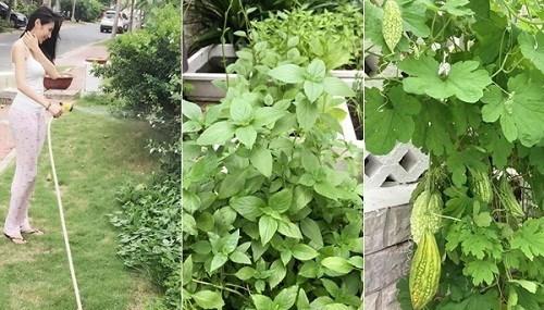 Mướt mắt vườn rau sạch trong biệt thự của các sao Việt