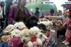 Cảnh bán chó con như thú bông gây tranh cãi trên mạng
