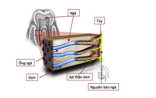 HAP - Công nghệ mới giải cứu răng ê buốt