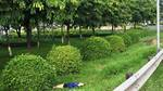 Người phụ nữ chết bất thường trong công viên ven quốc lộ 1