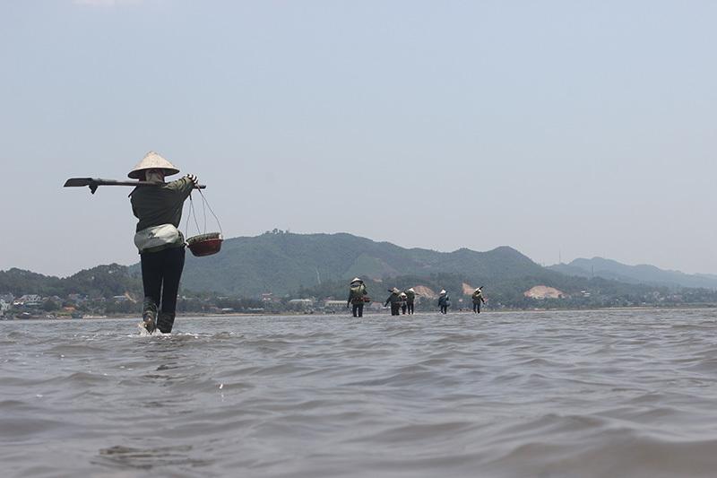 sá sùng, Vân Đồn, Quảng Ninh