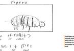 Những lời phê khác lạ trong bài văn tả con vật của học sinh Úc