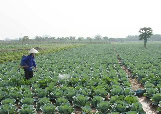 Việt Nam nhập hơn 200 triệu USD thuốc trừ sâu Trung Quốc
