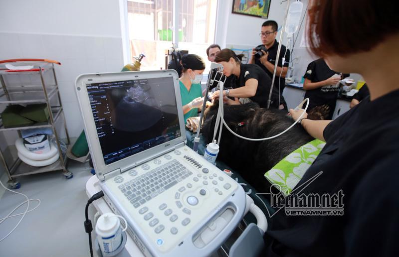 Bác sĩ Hong Kong phẫu thuật 'hở hàm ếch' cho gấu