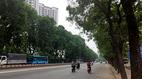 Hơn 1.300 cây xanh trước giờ 'khai tử' ở Hà Nội