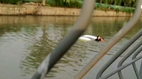 Nữ tài xế lùi xe xuống sông, nam đồng nghiệp không biết bơi vẫn lao theo