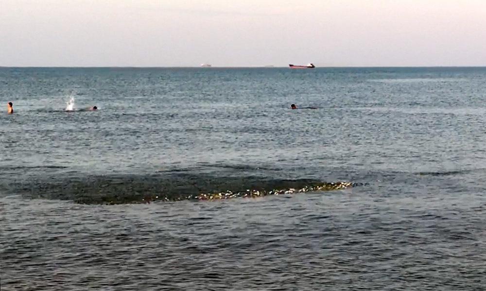 Đàn cá rẽ sóng ở biển Cửa Lò đông người