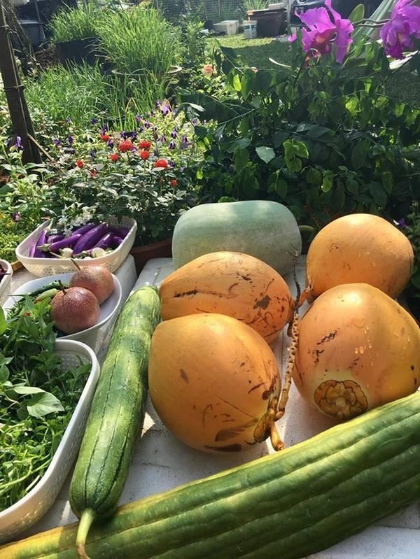 Đã mắt vườn rau quả bội thu, mỗi vụ hơn 300kg của mẹ Việt