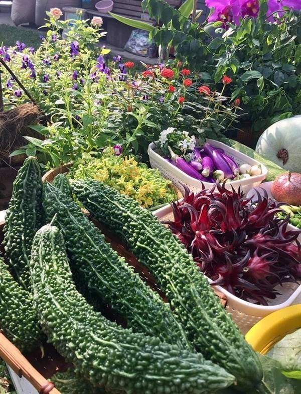 trồng rau sạch, trồng hoa, hoa Đà Lạt
