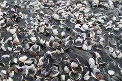 Diễn biến mới vụ cá, nghêu chết hàng loạt ở Kiên Giang