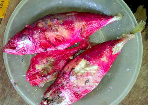 Nhậu cá chình khổng lồ 45 triệu, sợ cá Tầm Trung Quốc tiêm hóa chất