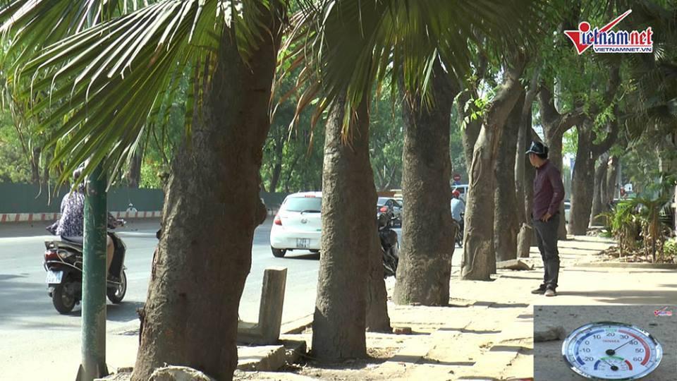 Sự thật dưới hàng xà cừ sắp bị di dời đường Phạm Văn Đồng