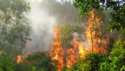 Cháy 13 ha rừng tại vườn quốc gia Tam Đảo