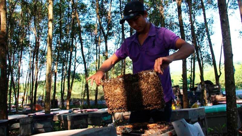 Lệ phí nuôi ong, nuôi ong phải đóng phí, Hà Tĩnh, huyện Kỳ Anh