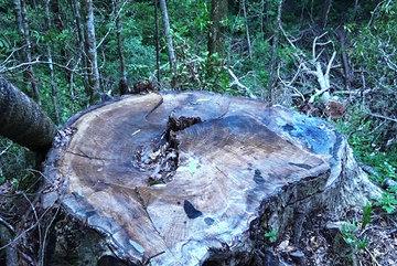 Chở thuê tang vật cho công an, chặt luôn gỗ trong khu bảo tồn