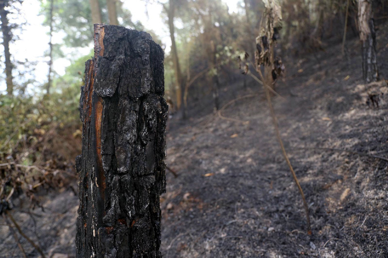 Rừng Sóc Sơn trơ trụi sau vụ cháy lịch sử