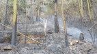 Cháy rừng Sóc Sơn: Nghi vấn đầu tiên