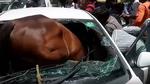 Nắng nóng dữ dội, ngựa choáng phi qua kính chui tọt vào ô tô