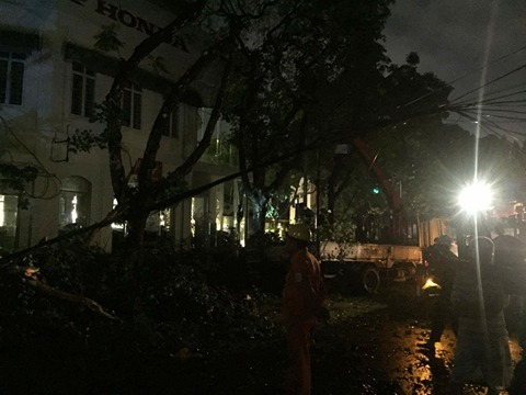 Cây đổ giữa Hà Nội, 2 người bị thương