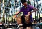 Quá lạ: Nuôi ong cũng phải đóng phí