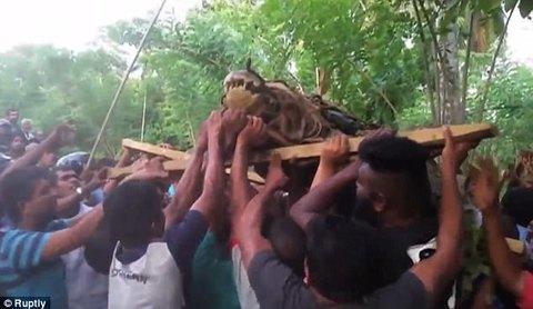 Bắt được cá sấu khổng lồ, 30 người khiêng không xuể
