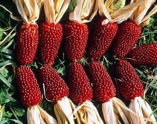 """10 loại rau củ """"đẹp, độc, lạ"""" được săn lùng trồng tại nhà"""