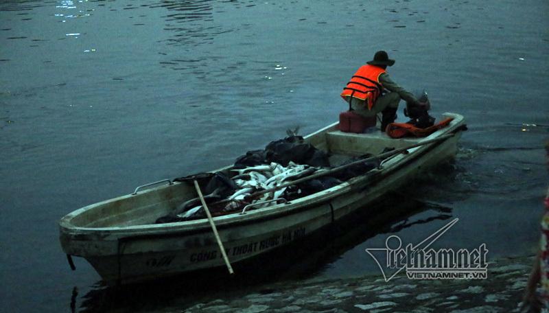 cá chết, cá chết trắng hồ Hoàng Cầu, Hà Nội