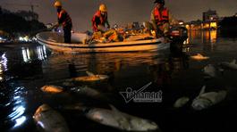 Trắng đêm vớt cá chết trên hồ Hoàng Cầu