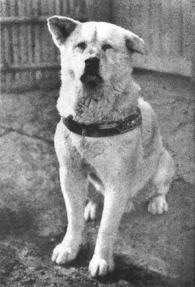 Cảm động chú chó trung thành 3 năm đợi chủ quay về