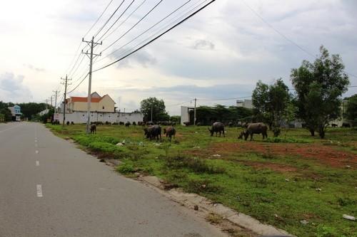 đất nền Bình Dương, đất nền Sài Gòn, đầu tư bất động sản