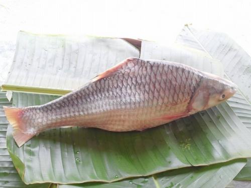 đặc sản Miền Tây, cá khủng, nuôi cá