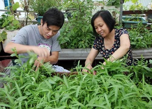 trồng rau sạch, trồng rau ban công, trồng rau thùng xốp, soái ca Hà thành