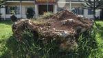 'Sung công' khối đá bán quý nặng 20 tấn