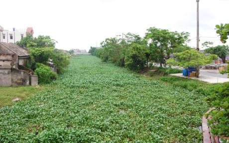 Thi thể, thi thể có hình xăm, thi thể nổi trên sông, Ninh Bình, huyện Kim Sơn