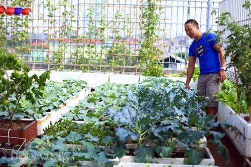 'Đổ rầm' trước những vườn rau quả chuẩn sạch của các ông bố ở phố