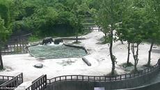 Cảm động đàn voi lao xuống hồ, giải cứu voi con