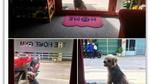 Sự thật câu chuyện chú chó ở Đồng Nai bị lạc 3 năm tìm về chủ cũ