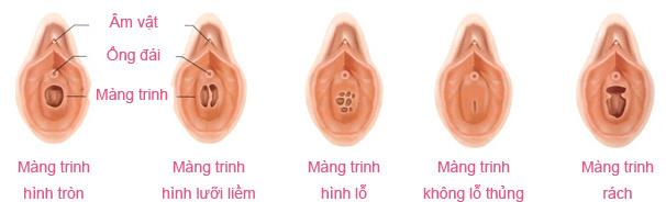 màng trinh, điểm G, sinh sản