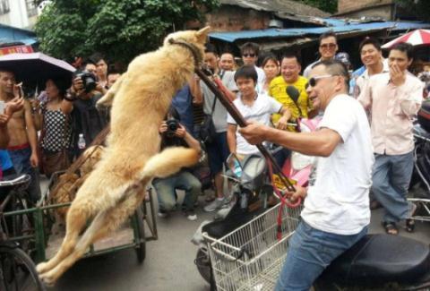 Đại hội thịt chó Trung Quốc tưng bừng giết chó nhân đạo?