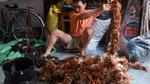 Cuộc chiến tồn tại khốc liệt của chổi lông gà Việt