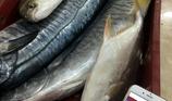 Tiết lộ sốc về mánh khóe của dân bán cá thu